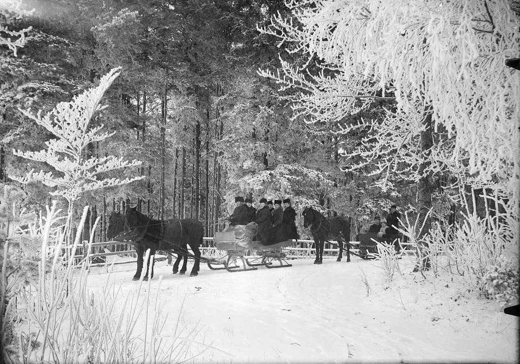 Skogsparti med slädspann, Skalunda, Västergötland 1907