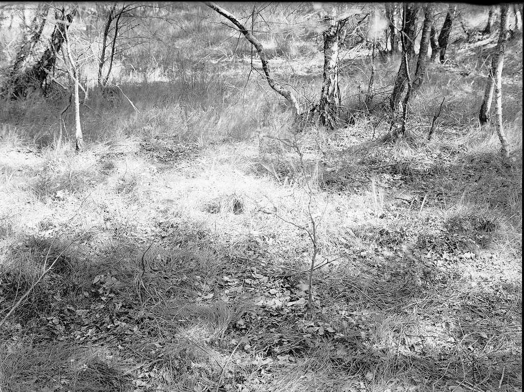 Biotop för trädpiplärka