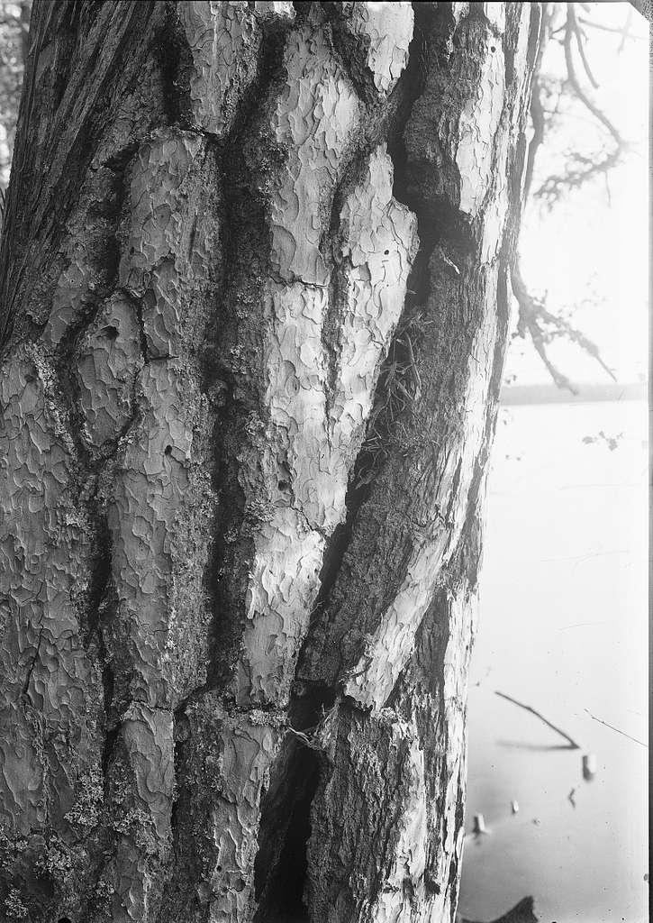 Boplats för trädkrypare